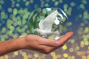 causa solidaria paz justicia