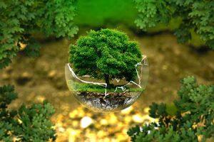 causa solidaria sostenibilidad